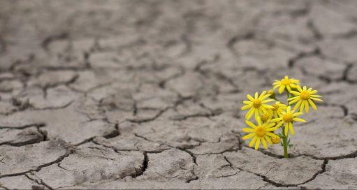 hopeflower.jpg