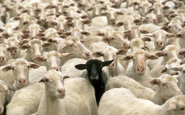 black sheep.jpeg