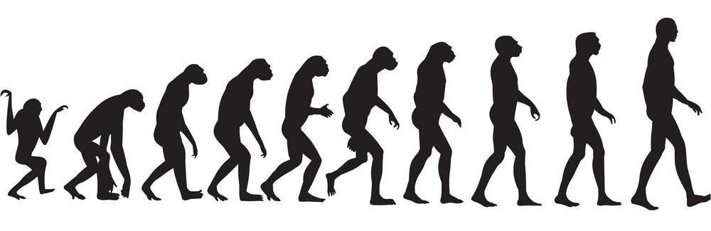 human-evolution-vector-74195