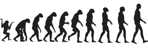 human-evolution-vector-74195