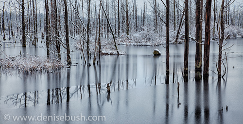 d-bush_reflections-on-ice.jpg
